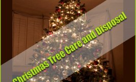 Christmas Tree Care and Disposal of Christmas Trees