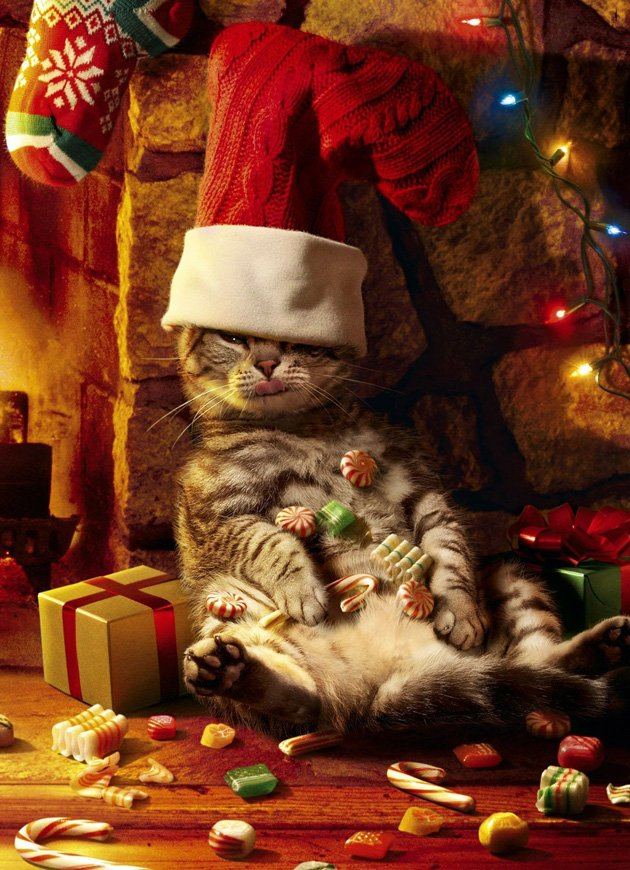 buying christmas cards online cats cards